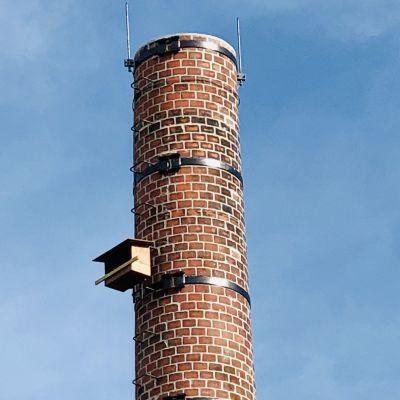 De jonge torenvalken worden geringd