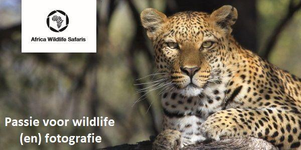 Africa Wildlife Safaris