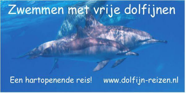 EnJoy Dolfijnreizen