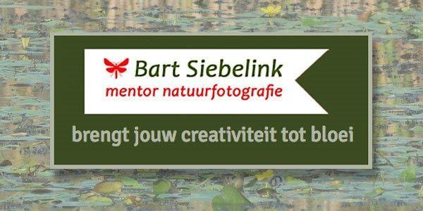 Mentor Natuurfotografie